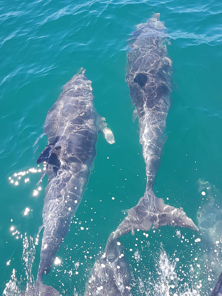 Mana Charters Dolphins